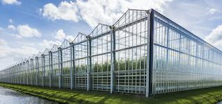 image of a commercial cannabis greenhouse